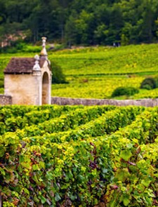 Burgundy Masterclass - 29th October